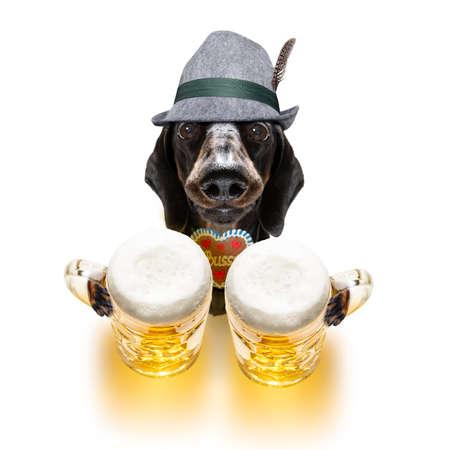 Dachshund or sausage  dog isolated on whit Zdjęcie Seryjne