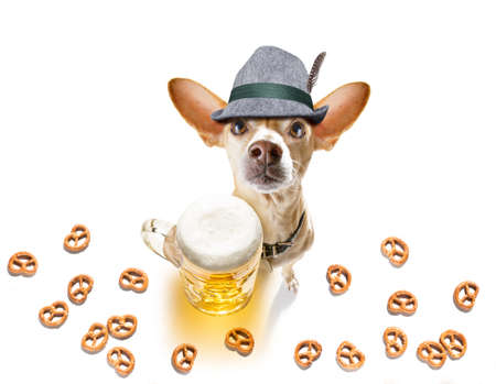 Bavarian chihuahua dog with pretzels and a mug  isolated on white