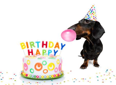 Dachshund o perro salchicha hambriento de un pastel de cumpleaños feliz con velas Foto de archivo