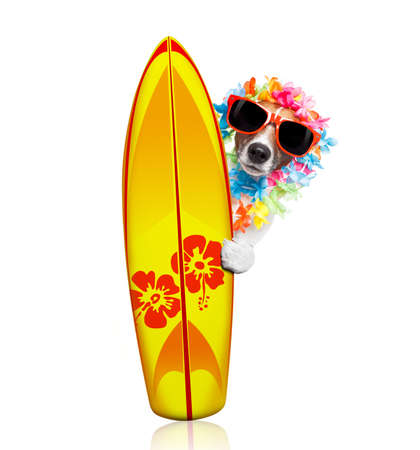 Summer paradise vacation surfer jack russell dog with surfboard and sunglasses isolated on white Stock Photo