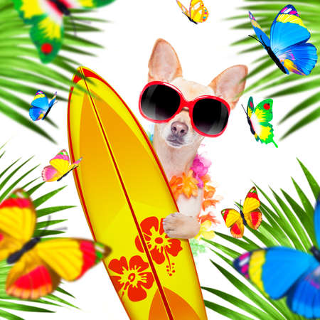 summer paradise vacation surfer chihuahua dog with surfboard and sunglasses isolated on white background, butterflies and palms