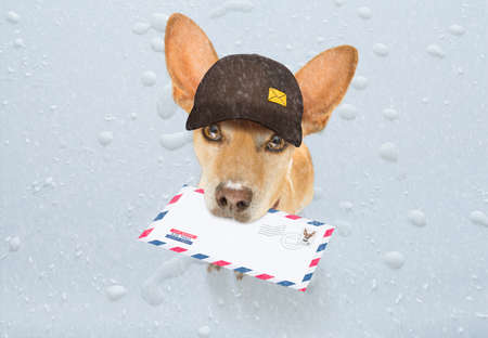 postman chihuahua dog delivering a big white blank empty envelope, with boxes and packages, rain and snow winter