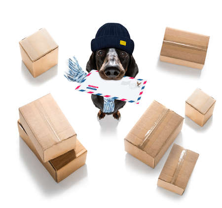 postman dachshund sausage dog delivering a big white blank empty envelope, with boxes and packages