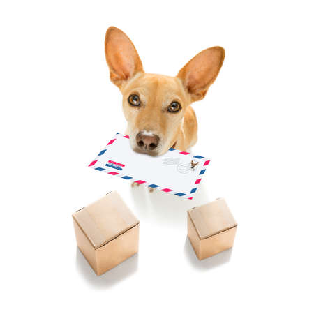 postman chihuahua dog delivering a big white blank empty envelope, with boxes and packages