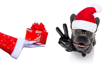 French bulldog with santa hat isolated on white