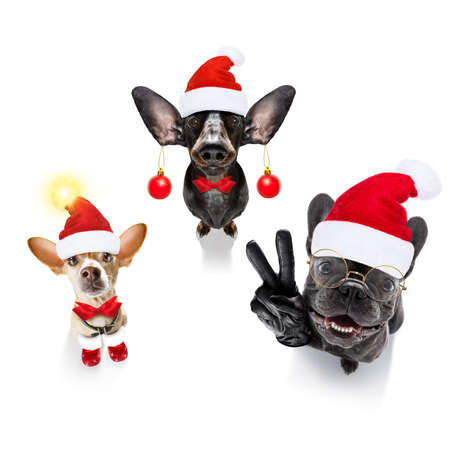 christmas santa claus gropu row of dogs isolated on white background, with funny red holidays hat