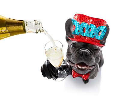 Perro celebrando la víspera de año nuevo con champán aislado en blanco Foto de archivo
