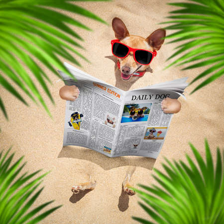 chihuahua  dog  buried in the sand at the beach on summer vacation holidays ,  wearing red sunglasses, reading a newspaper or magazine Stockfoto - 150494680