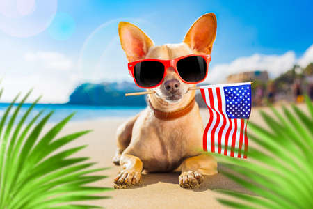 chihuahua dog at the ocean shore beach wearing red funny sunglasses and usa independence day flag for the 4th of July, behind palm trees