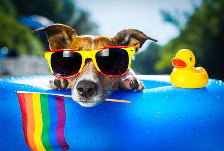 dog  at the ocean  beach on ihuahuasummer vacation holidays, with cool sunglasses and rainbow lgbt flag for gay pride,, behind palm trees Standard-Bild