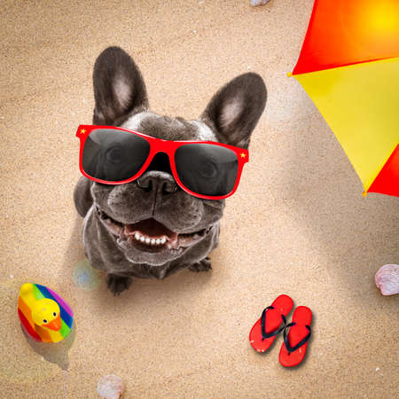 dog lying on towel under shade of umbrella relaxing and chilling out in the summer vacation