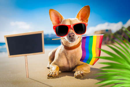 chihuahua dog  at the ocean  beach on summer vacation holidays, with cool sunglasses and rainbow lgbt flag for gay pride,, behind palm trees