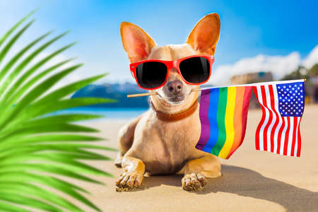 chihuahua dog  at the ocean  beach on summer vacation holidays, with cool sunglasses and rainbow lgbt flag for gay pride, behind palm trees Standard-Bild