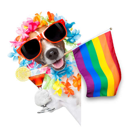 crazy funny gay homosexual  jack russell  dog proud of human rights ,sitting and waiting, with rainbow flag tie  and sunglasses , cheers with cocktail a toast