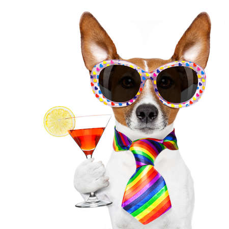 funny gay homosexual  jack russell  dog proud of human rights ,sitting and waiting, with rainbow flag tie  and sunglasses , cheers with cocktail a toast