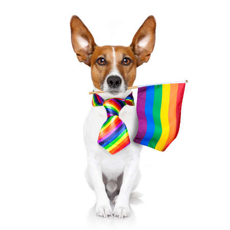 fairy funny gay jackrussell dog proud of human rights waving with lgbt rainbow flag and sunglasses, isolated on white background Standard-Bild