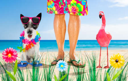 dog and owner sitting close together at the beach on summer vacation holidays, close to the ocean shore, wearing fancy funny sunglasses