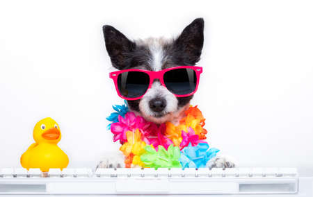 poodle dog booking summer vacation holidays online using a pc computer keyboard, wearing sunglasses and a flower chain, isolated on white background Standard-Bild