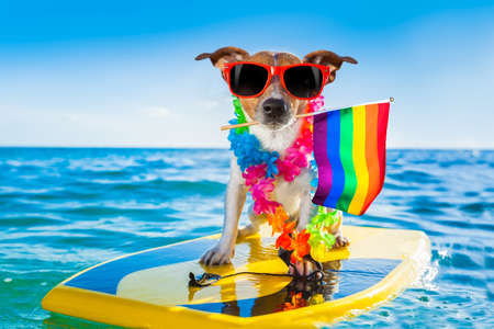 jack russell dog surfing on a wave, on ocean sea on summer vacation holidays, with cool sunglasses and flower chain and rainbow lgbt flag for gay pride