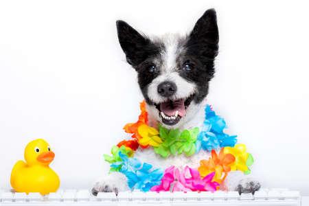 A dog booking summer vacation holidays online using a keyboard Standard-Bild