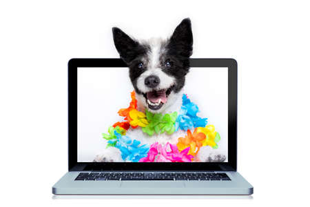 A dog booking summer vacation holidays online using a computer