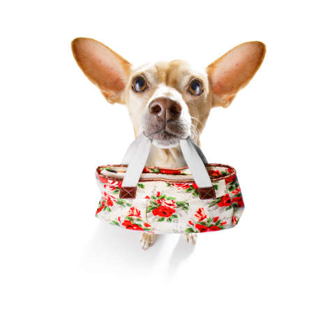 chihuahua dog with shopping bag in mouth ready for discount and sale at the mall, isolated on white background