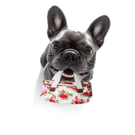 french bulldog dog with shopping bag in mouth ready for discount and sale at the mall, isolated on white background