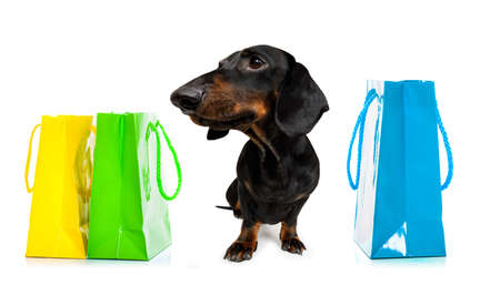 Dachshund sausage dog with shopping bags ready for discount and sale at the mall, isolated on white background