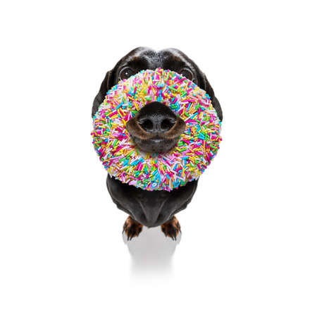silly dumb crazy dog with a donut in its face looking funny, isolated on white background