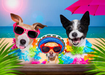 dog family with husband wearing sunglasses in summer vacation holidays with cocktail drink or beverage at the beach bar club