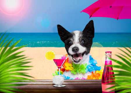 lady diva poodle in summer vacation holidays with cocktail drink or beverage at the beach bar club