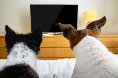 couple of dogs wacthing streaming tv program, movie or series in bed cozy together Stockfoto