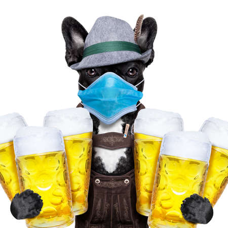 french bulldog dog holding couple of beer mugs isolated on white background, canceled celebration festival in munich and wearing face mask