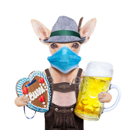 bavarian german chihuahua dog with gingergread and beer mug, isolated on white background, canceled celebration festival in munich and wearing face mask