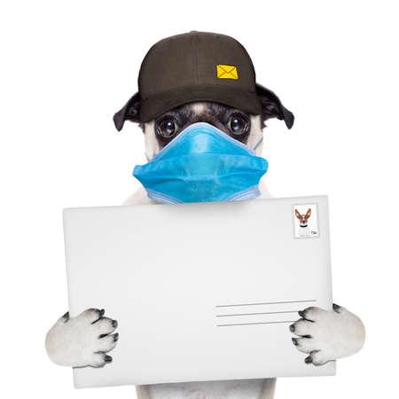postman pug dog delivering a big white blank empty envelope, in covid 19, cornavirus, virus time Banque d'images