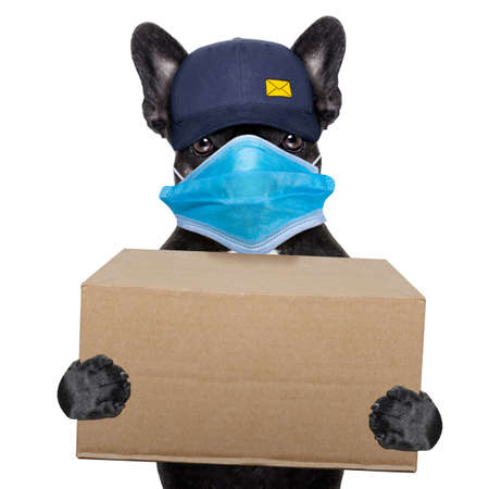 postal dog delivering a big brown package, in covid 19, cornavirus, virus time Stock Photo