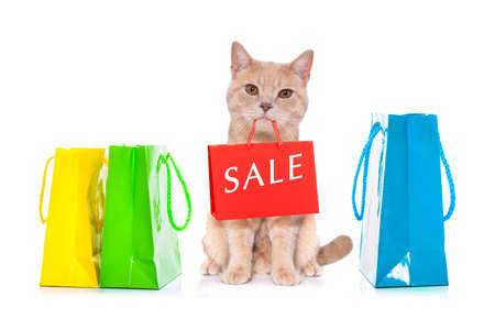 cat with shopping bags ready for discount and sale at the mall, isolated on white background Stock Photo