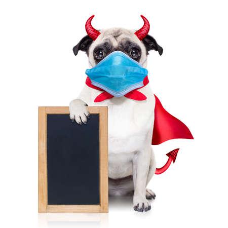 halloween devil pug dog hiding behind white empty blank blackboard or placard, in covid 19, cornavirus, virus time