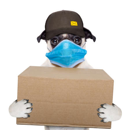 postman pug dog delivering a big brown package, in covid 19, cornavirus, virus time Stockfoto