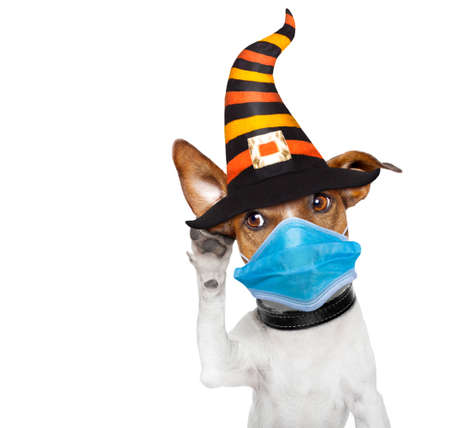 halloween devil jack russell dog scared and frightened, listening with one big ear, isolated on white background, in covid 19, cornavirus, virus time Stock Photo