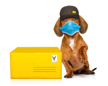 dachshund sausage dog delivering a big brown package as a postman with cap, in covid 19, cornavirus, virus time
