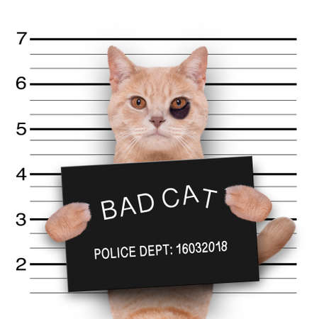 cat kitten kitty holding a police department banner, as a mugshot photo, at police office