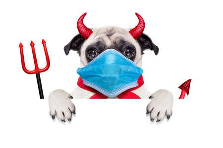 halloween devil pug dog hiding behind white empty blank banner or placard or poster, in covid 19, cornavirus, virus time