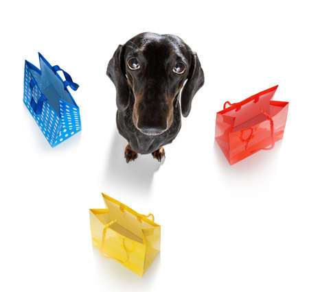 sausage dachshund dog with shopping bags ready for discount and sale at the mall, isolated on white background