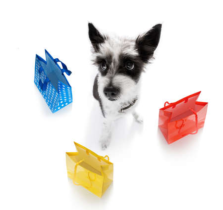 poodle dog with shopping bags ready for discount and sale at the mall, isolated on white background Stock Photo