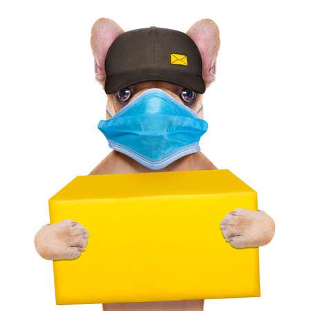 postman french bulldog holding a yellow shipping box, in covid 19, cornavirus, virus time
