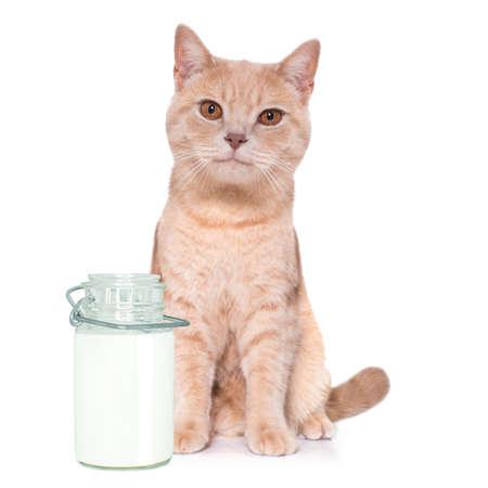 hungry cat kitten besides bottle milk for meal