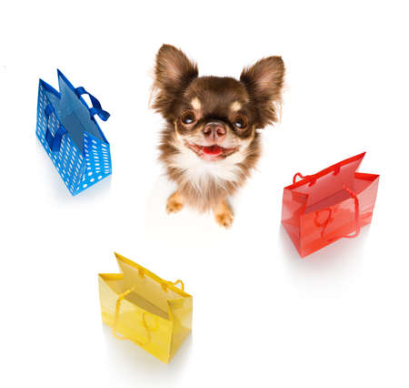 chihuahua dog with shopping bags ready for discount and sale at the mall, isolated on white background Stock Photo