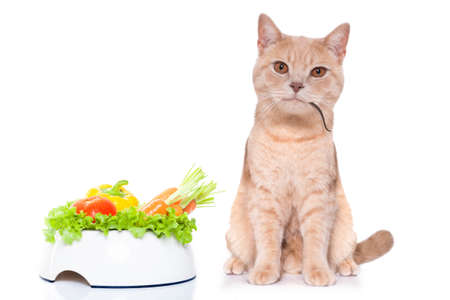 hungry cat or kitten with food bowl and mouse in mouth isolated on white background Stock Photo