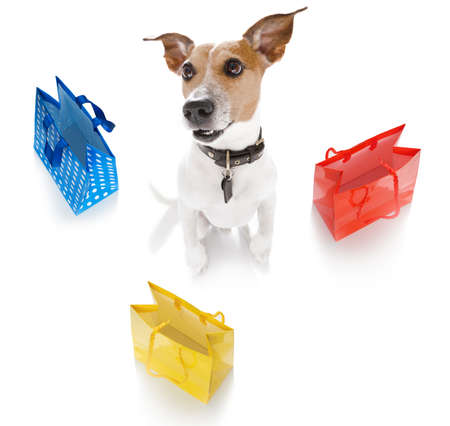 jack russsell terrier dog with shopping bags ready for discount and sale at the mall, isolated on white background